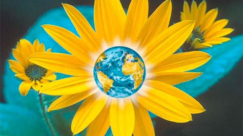 sunflower-rosenberg-book